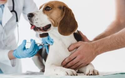 Projeto de deputado de MG propõe a criação do SUS Animal em todo o país