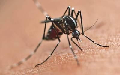 Casos prováveis de dengue e chikungunya registram leve crescimento na região